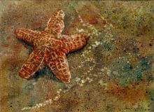 painting of starfish on a beach