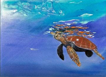 art painting sea turtle